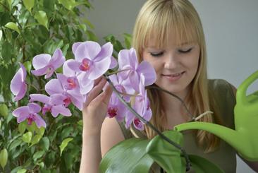 Arrosage des orchidées