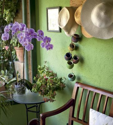 Orchidées dans un pot sur une table