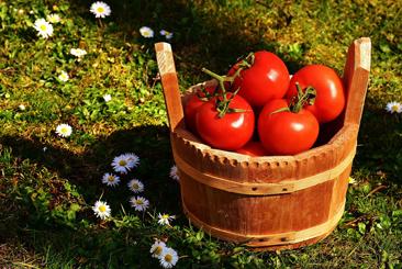 un panier avec à l'interieur de belles tomates rouges