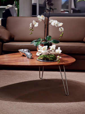 s 39 occuper d 39 une orchid e le mag iseki. Black Bedroom Furniture Sets. Home Design Ideas