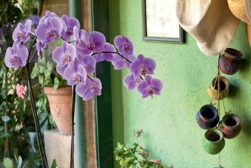 S'occuper d'une orchidée... - Le mag Iseki